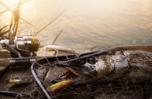 An image of Fishing tackle