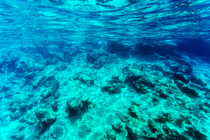 Picture of a saltwater seabed background